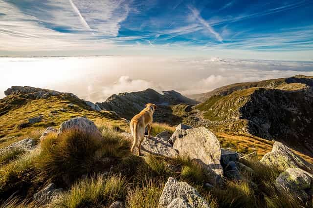hund, berg, mombarone